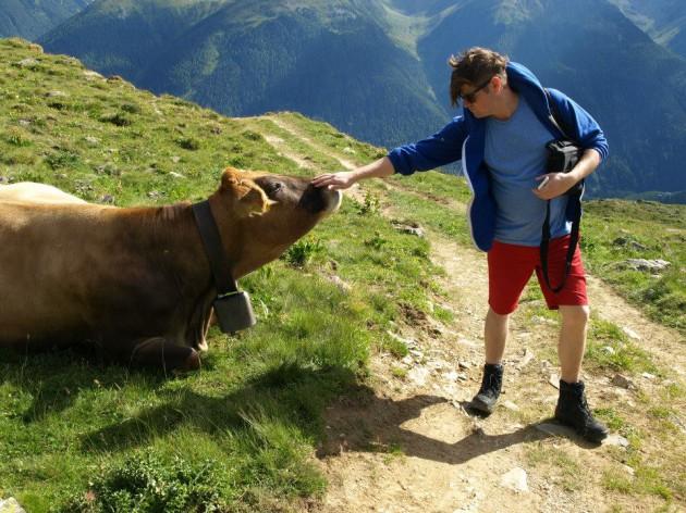 Detox alps_cow